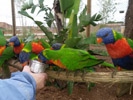 Feeding parrots at the Val D'Hérault nature Zoo & Parc